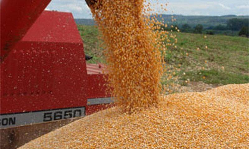 Máquina processa grãos