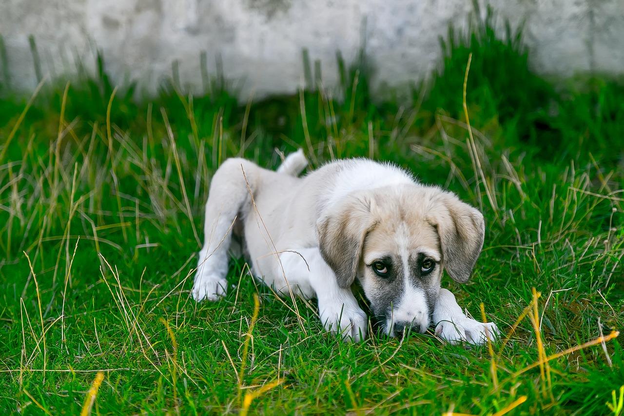 Você sabe o que fazer se seu cachorro convulsionar?