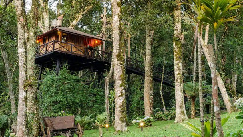 Veja 13 casas na árvore para se hospedar pelo Brasil