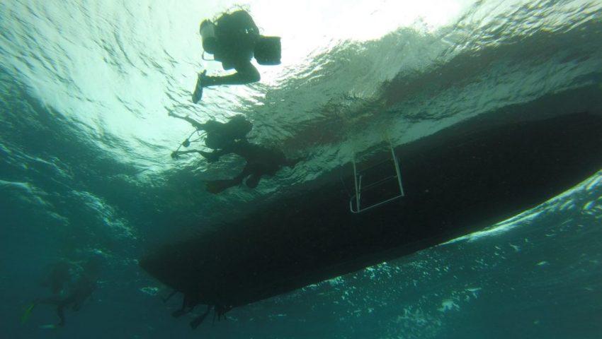 Tudo sobre mergulho de cilindro em Fernando de Noronha